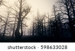 dead forest misty woods 3d... | Shutterstock . vector #598633028