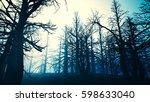 dead forest misty woods 3d... | Shutterstock . vector #598633040