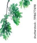 branch on white background ... | Shutterstock . vector #598677698