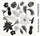 vector collection of tropical