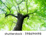 green forest. tree with green...   Shutterstock . vector #598694498