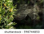Background with pollen of tree in spingtime
