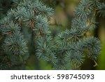 atlas cedar  cedrus atlantica f.... | Shutterstock . vector #598745093