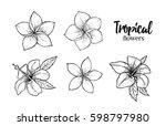 hand drawn vector illustration  ... | Shutterstock .eps vector #598797980