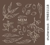 collection of neem  leaves and... | Shutterstock .eps vector #598831118