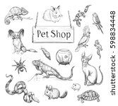 vector collection of sketches... | Shutterstock .eps vector #598834448