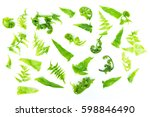 fresh green baby leaves of paco ... | Shutterstock . vector #598846490