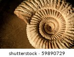 Closeup of an ammonite prehistoric fossil on a ceramic textured background - stock photo