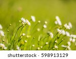 Beautiful Meadow With Wild...