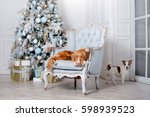dog in the scenery  the holiday ... | Shutterstock . vector #598939523