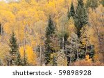 A Colorful Hillside Of Pine An...