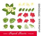 set of tropical flowers... | Shutterstock .eps vector #599002400