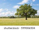 Big Oak On The Green Field In...