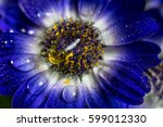 Blue Flower With Drops Of...