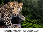 Close Up Young Leopard In Nature