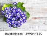 Blue Flowers On The Table In...