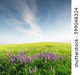 field with flowers in mountain...   Shutterstock . vector #599048324