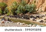 herd of goats at the todra...   Shutterstock . vector #599095898