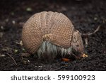 southern three banded armadillo ... | Shutterstock . vector #599100923