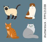 cat breed cute pet portrait... | Shutterstock .eps vector #599121338