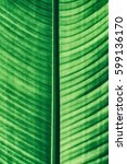 stripes of green leaf  abstract ... | Shutterstock . vector #599136170