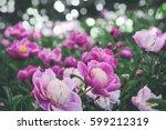Flowers Background. Beautiful...