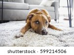 Stock photo shepherd mix puppy dog makes funny face lying on shag rug carpet at home 599214506