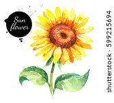 Hand Drawn Watercolor Sunflowe...