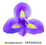 One Blue Iris Flower Isolated...