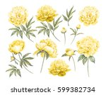 yellow spring collection with...   Shutterstock . vector #599382734