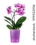 beautiful orchid in a purple... | Shutterstock . vector #599523536