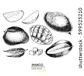 vector hand drawn set of exotic ... | Shutterstock .eps vector #599525210