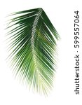 Small photo of palm leaf on white background clipping path