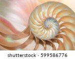 Nautilus Shell Cross Section...