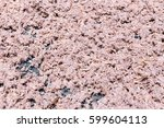 shrimp paste  sun dried shrimp... | Shutterstock . vector #599604113