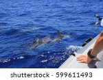 dolphins floating along the tourist cruise boat, photography jumping dolphins