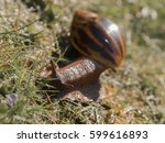 big snail outside with grass  | Shutterstock . vector #599616893