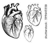 sketch ink human heart.... | Shutterstock .eps vector #599645558