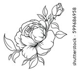 inflorescence of roses and... | Shutterstock .eps vector #599686958