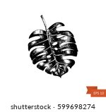 hand drawn leaf .vector... | Shutterstock .eps vector #599698274