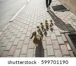 duck mother is lost with her... | Shutterstock . vector #599701190