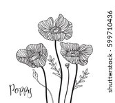 hand drawn poppy flowers.... | Shutterstock .eps vector #599710436