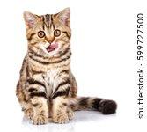 funny scottish kitten sitting... | Shutterstock . vector #599727500
