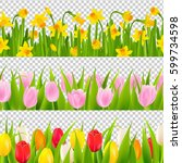 Tulip And Narcissus Border Wit...