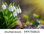 Beautiful Snowdrops On Bokeh...