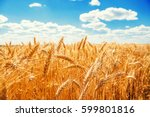 gold wheat field and blue sky. | Shutterstock . vector #599801816