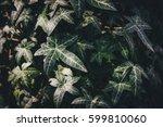 green garden background  | Shutterstock . vector #599810060