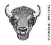Wild Bison Large Mammal Hand...