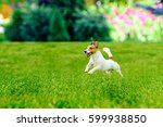 Stock photo happy active dog playing at colorful garden lawn 599938850