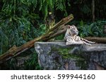 forceful white tiger with blue...   Shutterstock . vector #599944160